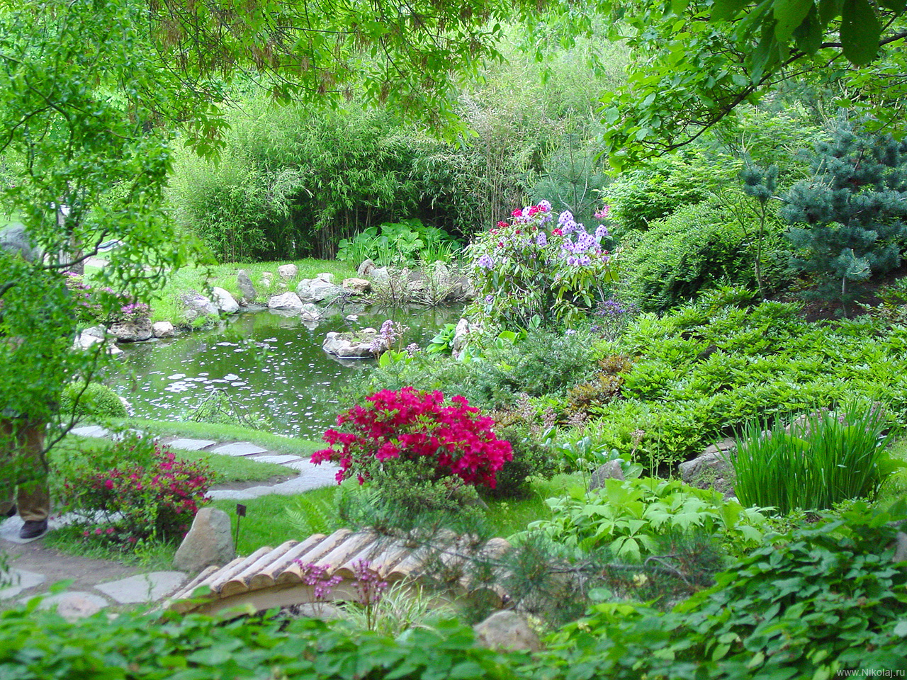 http://gardenphoto.narod.ru/photo/garden.nikolaj.ru_2754_1280.jpg